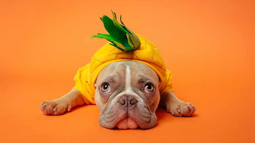 """Dog Halloween Costumes: 10 Sources For """"Dog Gone"""" Funny Costumes"""